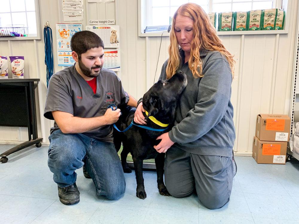Animal Boarding Pieper Veterinary In Ct