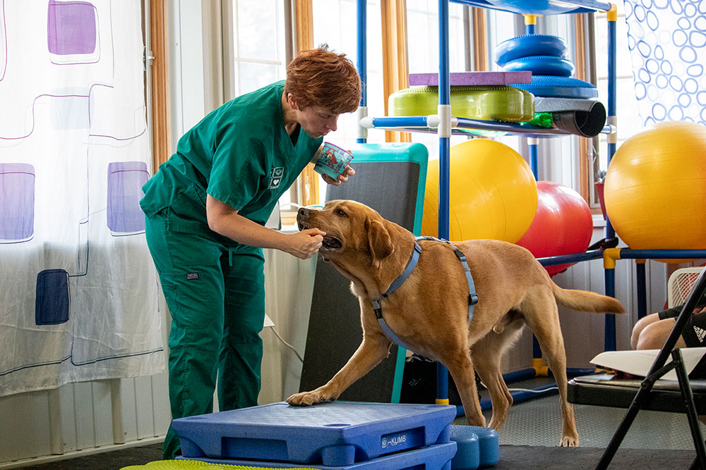 Animal Physical Therapy | Pieper Veterinary in CT